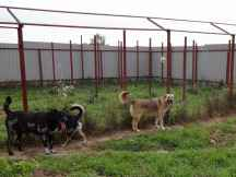 Dogs_01
